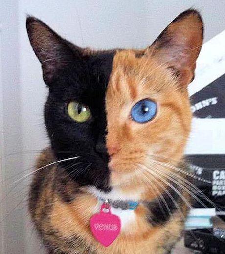 Police Cat Stuffed Animal